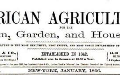 Wine in Small Batch: An Article first published in 1866
